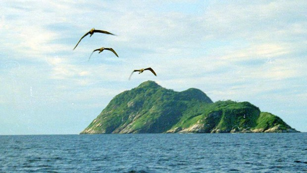 Ilha-de-Queimada-Grande-Brasil